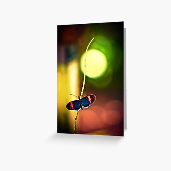Key West Butterfly Greeting Card