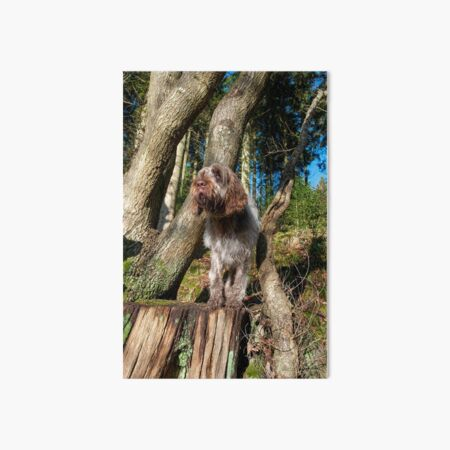 In the woods Spinone Art Board Print