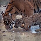 Mother and Cub by Designer023