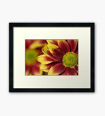 Floral Macro Framed Print