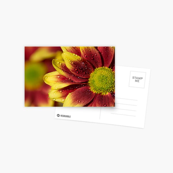 Floral Macro Postcard