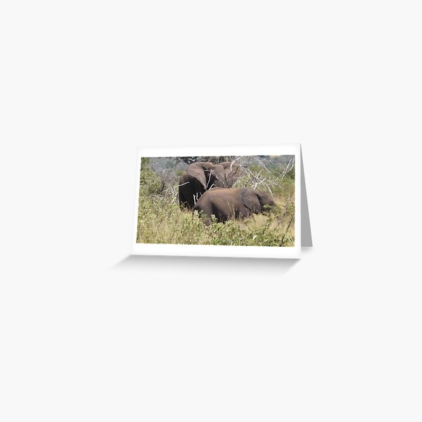 Matriarch & Her Calf Greeting Card