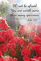 Luke 12:7 by Terri Chandler