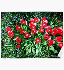 Spring Flowers, Mainline, PA Poster