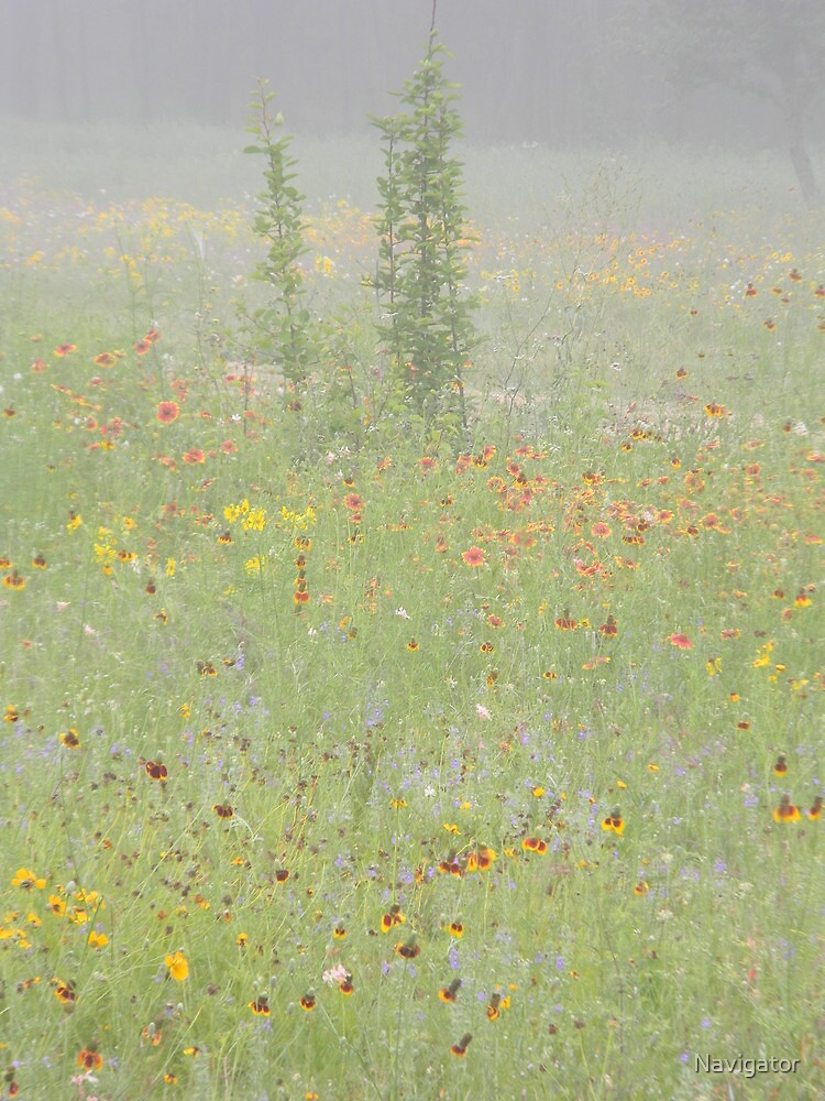 Mist on the Meadow by Navigator