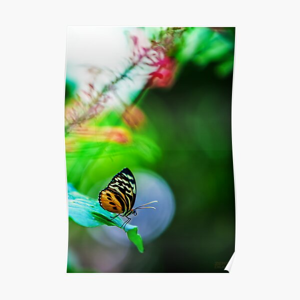 Key West Butterfly 2 Poster