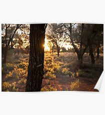 Sunset over desert landscape Poster