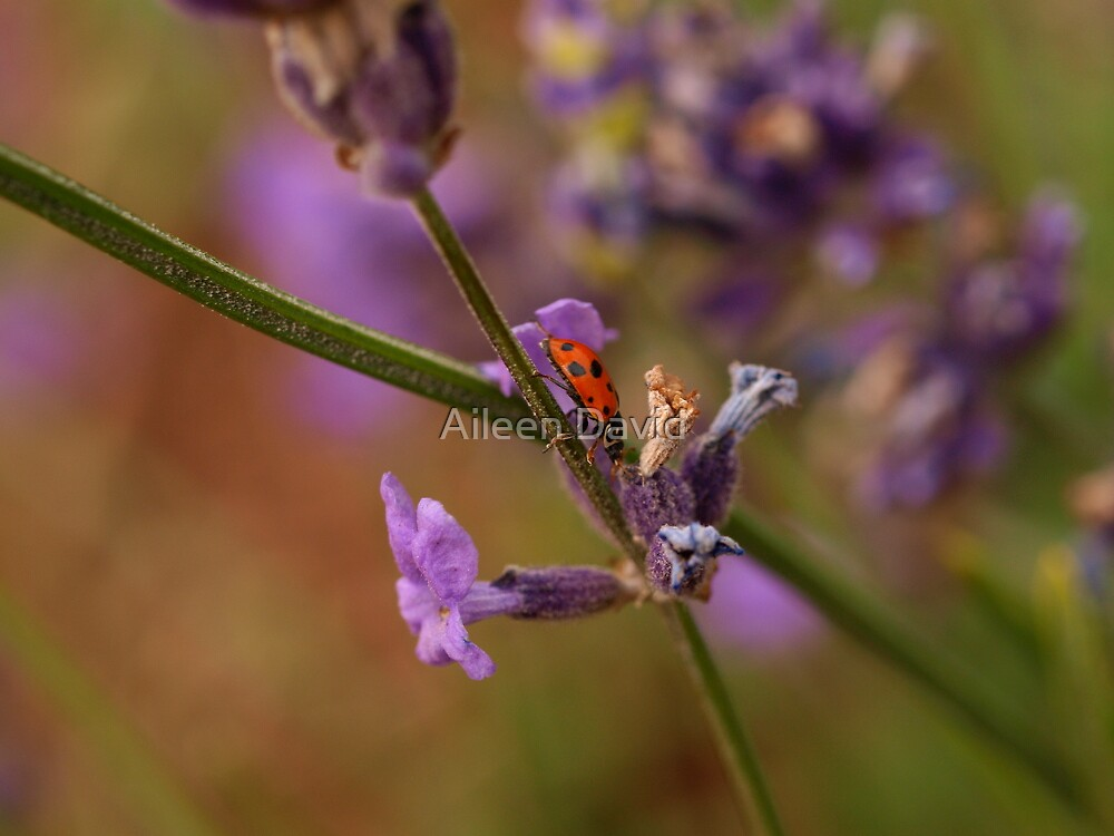 Busy Lady by Aileen David