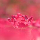 Sea of Pink by Sabaa