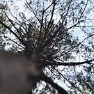 Summer tree by Designer023