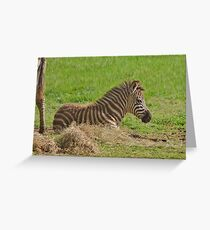 Baby Zebra Resting Grußkarte
