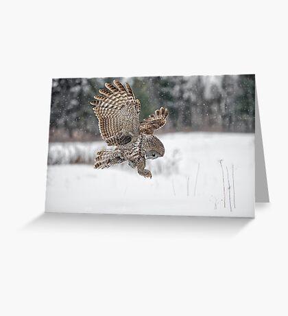 Homing in on prey... Greeting Card
