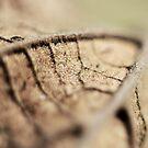 Leaf by Zen-Art (Zenith)
