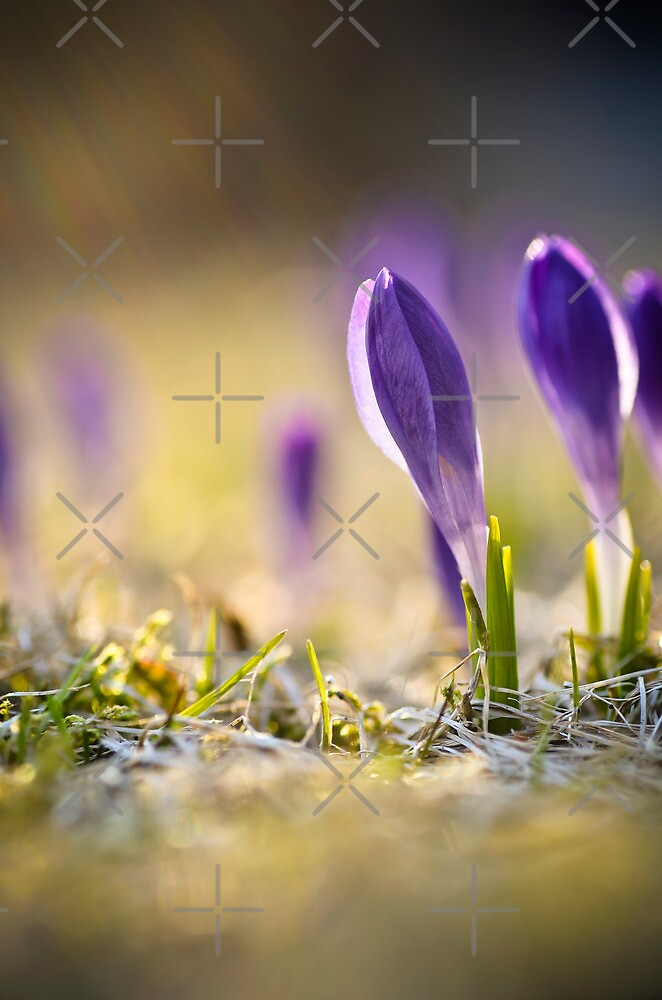 Sign of Spring by marina63