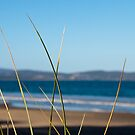 Reeds on 7 Mile Beach by Alastair Creswell