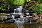 Onondaga Falls In Ricketts Glen by Gene Walls