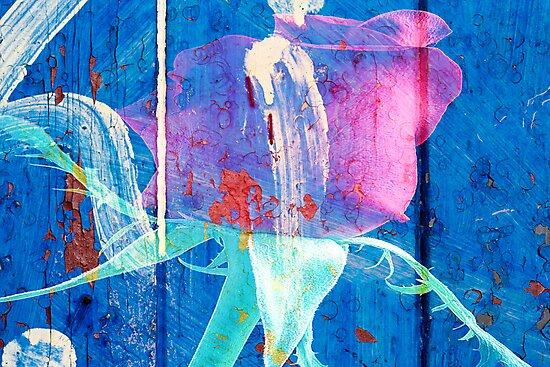 Rose Graffiti by Ian Jeffrey
