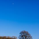 Blue Sky Day England by mlphoto