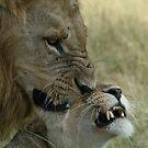 A Mating Pair by Pauline Adair