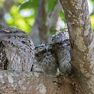 Out Of The Nest by byronbackyard