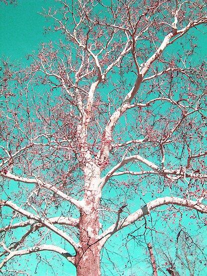 White Bark by erinv2000
