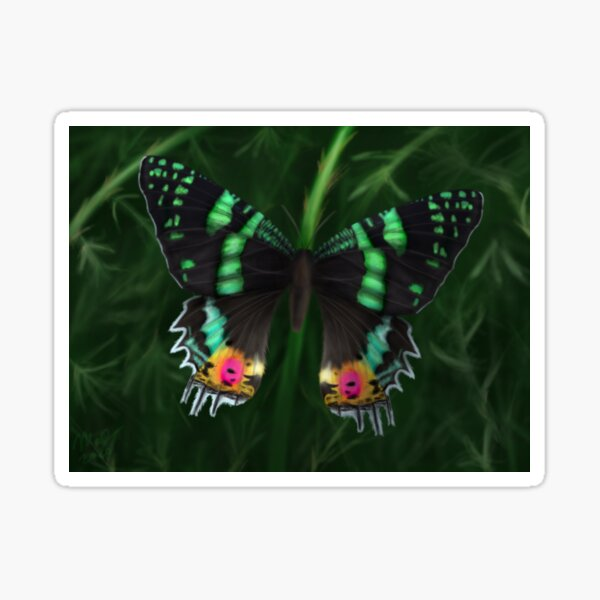 Madagascan Sunset Moth Sticker