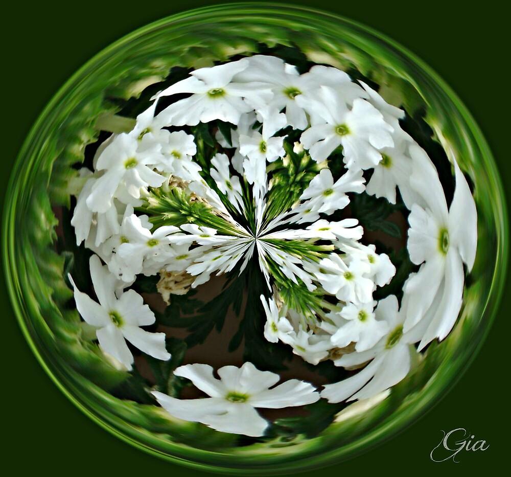 """""""Bacopa"""" by Gail Jones"""