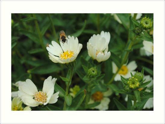 Honey by MaryAnn Moore-Bock