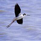 Stork takes flight by Tori Snow