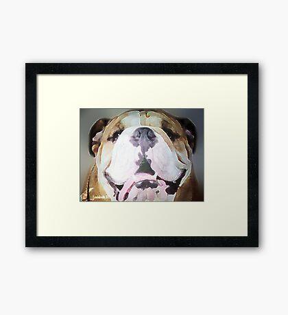SANT BERNARD  Framed Print
