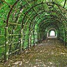 Green tunnel by Arie Koene