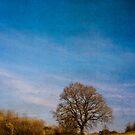 Tree in Field Berkshire England by mlphoto