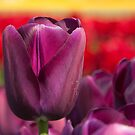 Purple Passion by Barb White