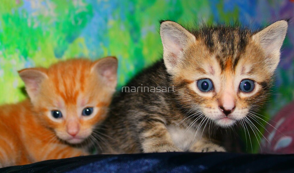 kittens by Marina Terkulova -Tesch