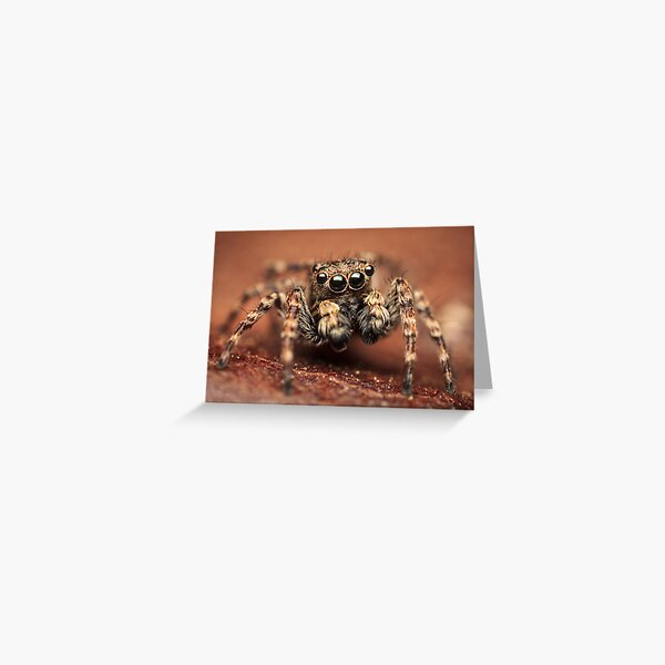 Sitticus pubescens male jumping spider Greeting Card