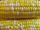 Corn by FrankieCat
