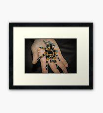 Tarantula Spider Framed Print