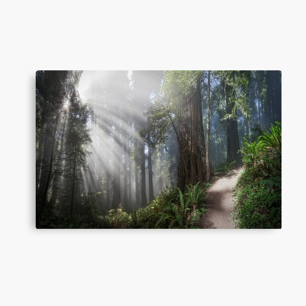 Fireworks in the Forest III Canvas Print