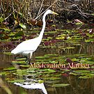 Heron - Moderation Marker by MaryinMaine