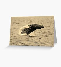 Humpback Whales In Hawaii Greeting Card