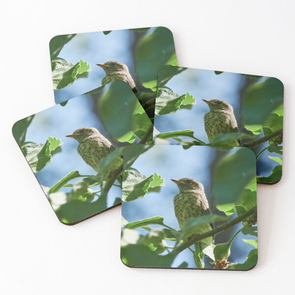 So this is the world. Young European pied flycatcher Coasters (Set of 4)