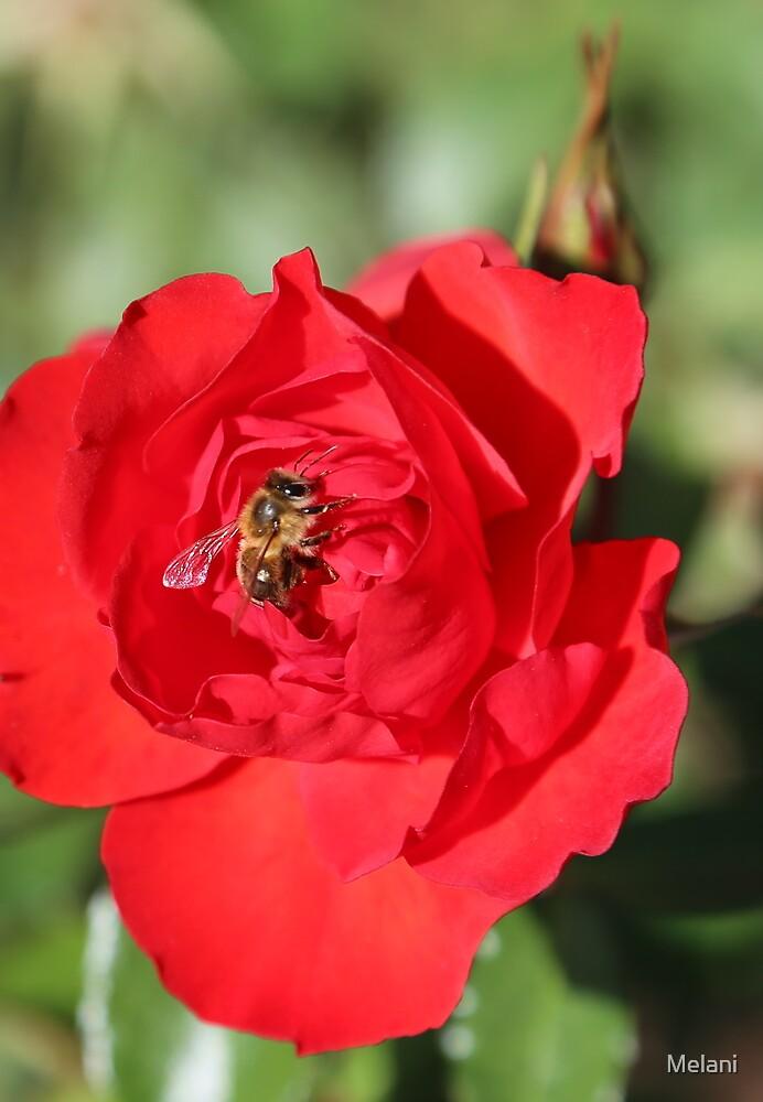 A Bees life by Melani