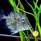Tasseled Filefish by redscorpion