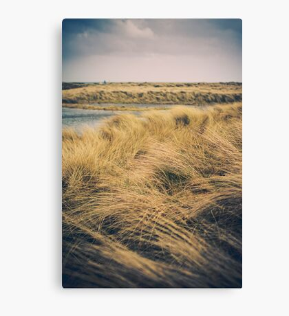 Bull Island, Ireland Canvas Print