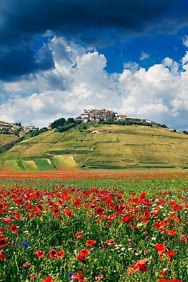 Castelluccio di Norcia by Alessio Michelini