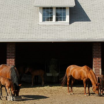 Foal Barn by coldairballoon