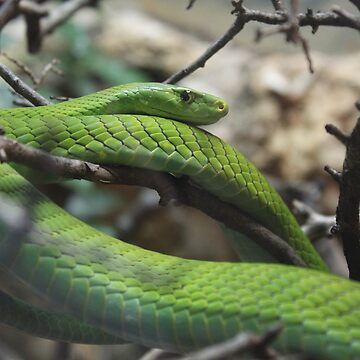 Tree Snake by coldairballoon
