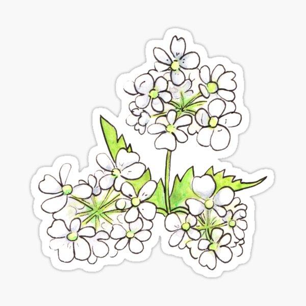 Cow Parsley Flower Sticker