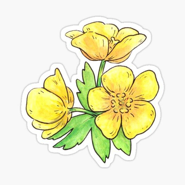 Meadow Buttercup Flower Sticker