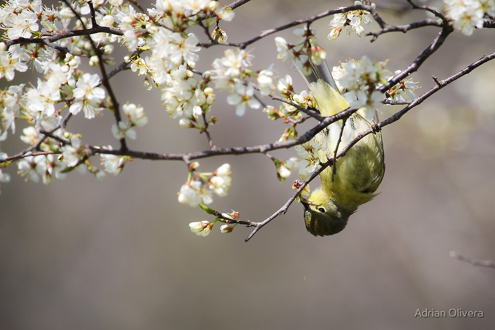 Spring Is Here! by Adrian Olivera
